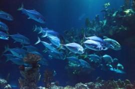 ´Chytré´ rybářské sítě umožní uniknout příliš malým rybám