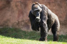 Prague Zoo: Complicated childbirth Kamba