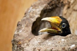 The evacuees eggs are hatched in the Prague zoo has hundreds of young birds and reptiles