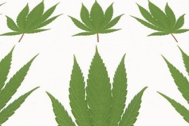 Cannabis relieves sore joints