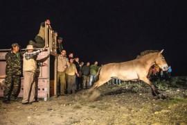 Return wild horses: score 12:0