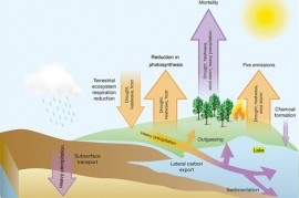 Climate change is causing extreme drought. A drought in turn worsen warming
