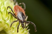 What was this year's tick season?