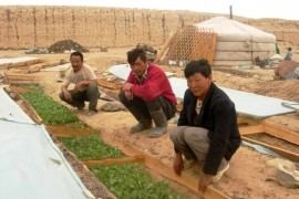 How to start business with yogurt and vegetable growing?