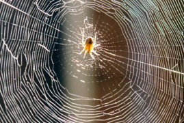 Spiders are not pure predators, feeding on pollen and