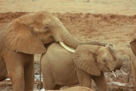 Even elephants can do to comfort her sad or frightened species, research has shown