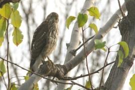 Endangered species of birds in the Czech Switzerland