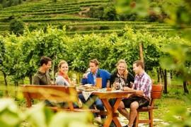Wine autumn of Lower Austria