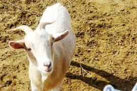 Tick-borne encephalitis - boil milk, or vaccinate?