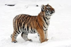 Snow can use at the zoo and animals from warmer climate