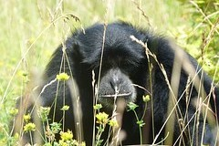 Czechs in Cameroon after fourteen years have discovered a rare chimpanzee