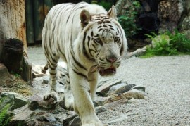 ZOO Liberec: Exhibition Giants and additions of rare animals