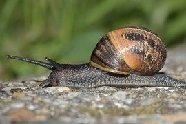 Snail communities are similar throughout the world. Due shipping