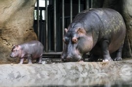 Prague Zoo: Maruska and Slavek are parents again