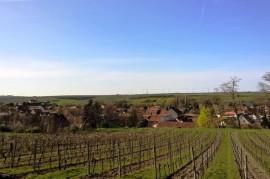 Domestic vineyards are awakening earlier