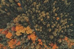 Aerial photography reveals heat loss, diseased trees and missing traffic signs