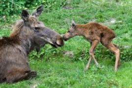 Babyboom at Prague Zoo