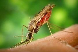 Zika virus - a threat to the current traveling