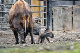 Prague Zoo: Paddocks is filled with animals and incubates them and new babies