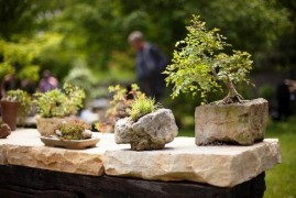 Japanese perfection: Troy botanical garden is preparing an exhibition of bonsai
