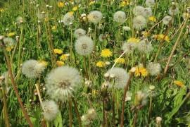 Allergy do not underestimate! He can unleash an unpleasant headache