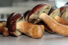 Mushrooming - the healthiest Czech tradition