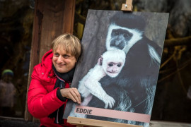 At the Prague Zoo was christened a young cowhide guerrez