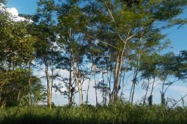 Bolivia runs the motorway construction of the Amazon National Park