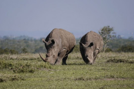 They once were killing. Now they are saving wild animals together