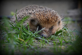 The Londoners love their hedgehogs. And to get them done, the tunnels are drilled in the walls