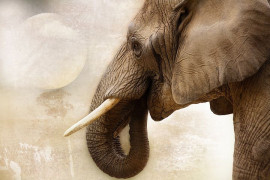 Mark Zuckerberg, according to US Senators, is making money for selling elephant killers