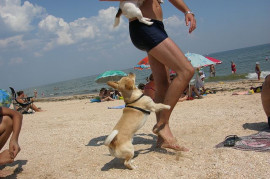 With a dog to the sea? Plan ahead and select a destination well in advance